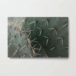 Cactus Close-Up Metal Print