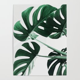 Monstera, Leaves, Plant, Green, Scandinavian, Minimal, Modern, Wall art Poster