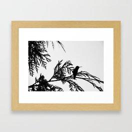 the thoughtful hummingbird Framed Art Print