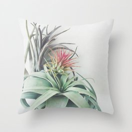 Air Plant Collection II Throw Pillow