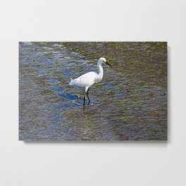 Provocative Pretender - horizontal Metal Print