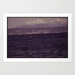 BLACK BRANT GEESE REST ON THE WATERS OF PUGET SOUND AT ALKI POINT DURING THEIR ANNUAL MIGRATION Art Print