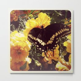 Butterfly with orange flowers Metal Print