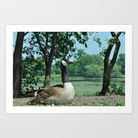 Deluxe Ducks #16 Art Print