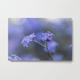 Myosotis Flower - Scorpion Grasses - Forget-Me-Not Metal Print
