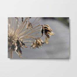 Spikey Flower Metal Print