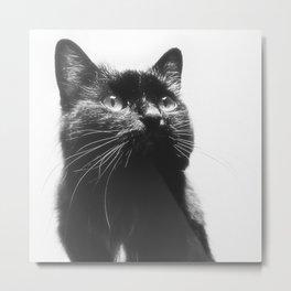 Here's lookin' at Mew too! Metal Print