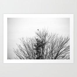 B&W Bird Art Print