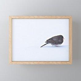 Long Journey Junco Framed Mini Art Print