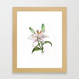 white lily Framed Art Print