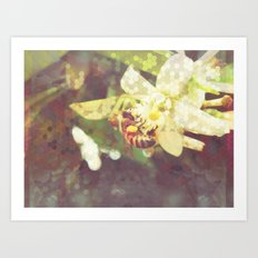 Honey Bee: Pearl Art Print