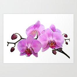 orchid flower minimalist minimal Art Print
