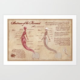 Anatomy of the Mermaid Art Print
