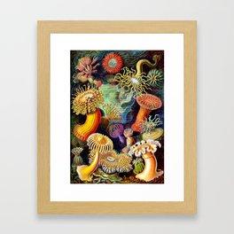 Under the Sea : Sea Anemones (Actiniae) by Ernst Haeckel Framed Art Print