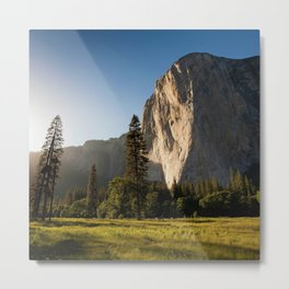 Yosemite National Park - Beautiful Forest Photography Metal Print