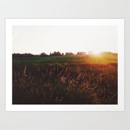 Sunset Cornfield Art Print