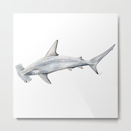 Hammerhead shark for shark lovers, divers and fishermen Metal Print