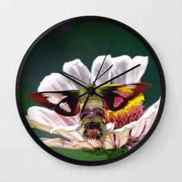 Hummingbird Moth Wall Clock