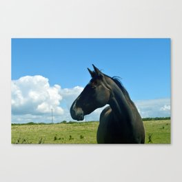 Horse, Sherkin Island Canvas Print