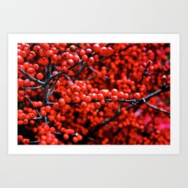 Festive Berries 1 Art Print