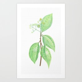 Cinnamon Herb Art Print