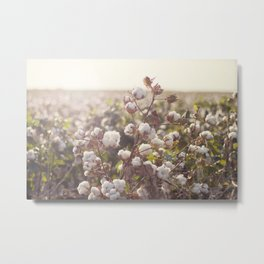 Cottonfield Metal Print