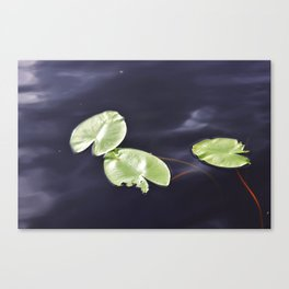 Waterlily pads Canvas Print
