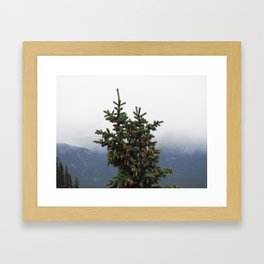 Canadian Spruce Framed Art Print