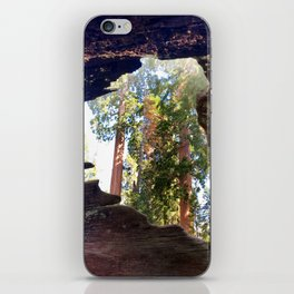 View of Giant Sequoias from Inside a Fallen Sequoia iPhone Skin