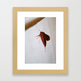 Pretty in Pink Moth Framed Art Print