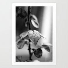 Sparkles in Black and White Art Print