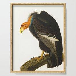 Californian Vulture John James Audubon Vintage Scientific Birds of America Illustration Serving Tray