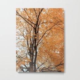 Autumn Leaves IV Metal Print
