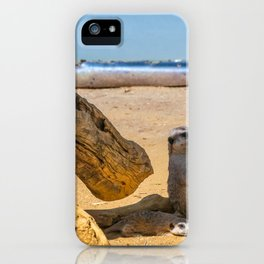 Funny meercats sitting in shadow in sunny day, cute animals iPhone Case