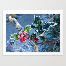 Holly tinged with frost Art Print