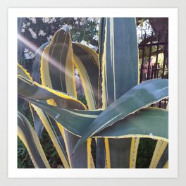 Ojai, California: Agave Dance Art Print