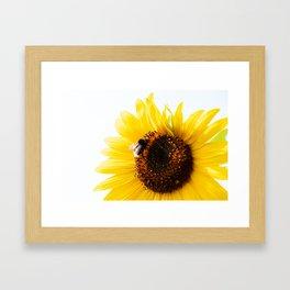 Bee on a Sunflower Framed Art Print