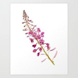 Flowers of fireweed Art Print