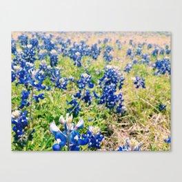 Bluebonnets Canvas Print