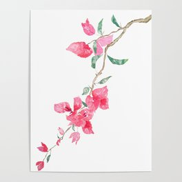 red  pink  bougainvillea watercolor Poster