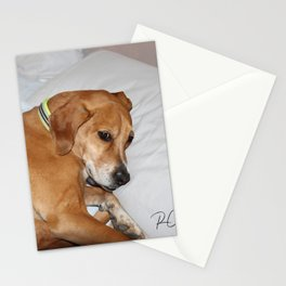 """Black Mouth Cur mix """"Charlie"""" Stationery Cards"""
