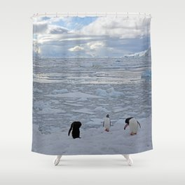 Gentoo Penguins Preening in the Snow Shower Curtain