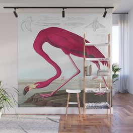 American Flamingo John James Audubon Vintage Scientific Hand Drawn Illustration Birds Wall Mural