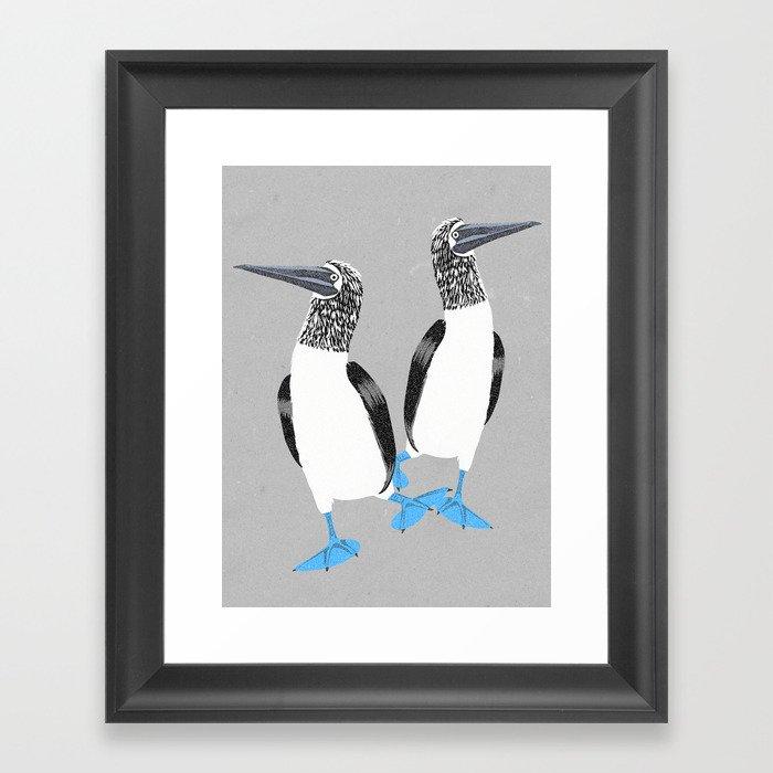 Blue-footed booby Gerahmter Kunstdruck