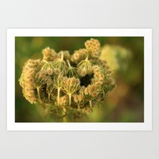 Queen Anne's Lace Flower About to Bloom Art Print