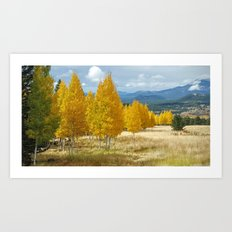 Aspens in Flagstaff Art Print