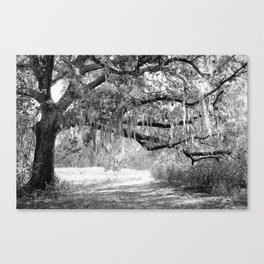 New Orleans Oak Tree Canvas Print