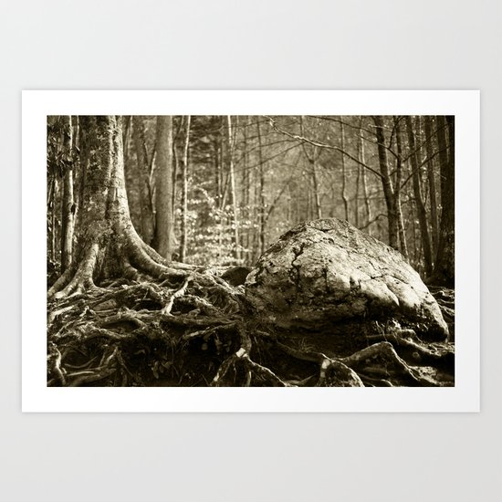 Strong Roots  Art Print