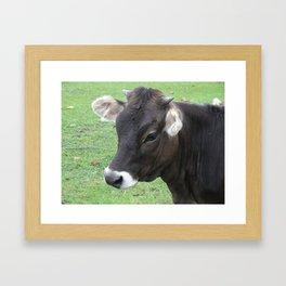 #406 7 2 13 nature cow hobby farm bitterroot mt Framed Art Print