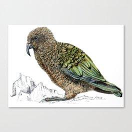Mr Kea, New Zealand parrot Canvas Print